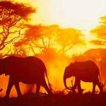 【第80回】アフリカ株のハイリターン型ファンド(設定来+120%)