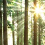 【第220回】年率+13.8%の森林ファンドのご紹介です。